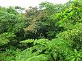 Dominica, Karibik - At Wotton Waven - panoramio.jpg