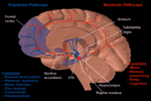 Dysregulation of the neurogenic pathways of serotonin and dopamine, two important neurotransmitters have been implicated in the etiology, pathogenesis and pathophsiology of various neuropsychiatric disorders, including anorexia nervosa.