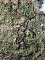 Dornbirn-disapered field mouses passages-07ASD.jpg
