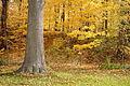 Downsview Dells Park - November 2nd, 2015 (22684493976).jpg