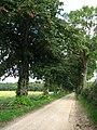 Driveway to Wood Farm - geograph.org.uk - 552498.jpg