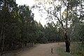 Dubbo NSW 2830, Australia - panoramio (162).jpg