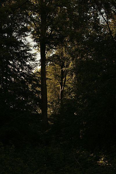 Datei:Dunkler Wald Cappenberg MG 2639.jpg