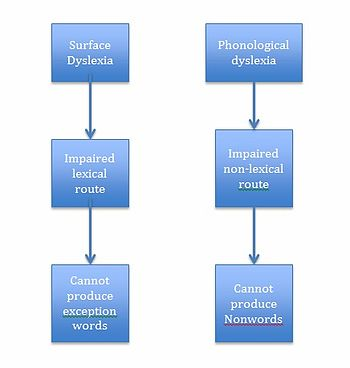 phonological theory of dyslexia The phonological deficit hypothesis in chinese developmental dyslexia  phonological deficits in dyslexia:  dyslexia: theory and research.