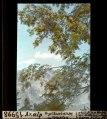 ETH-BIB-Axalp, Vogelbeerbaum mit Früchten-Dia 247-15998.tif