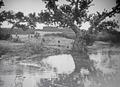 ETH-BIB-Baum am Niger mit Stadt im Hintergrund-Tschadseeflug 1930-31-LBS MH02-08-0499.tif