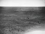 ETH-BIB-Fliehende Wildebeest (Gnus)-Kilimanjaroflug 1929-30-LBS MH02-07-0345.tif
