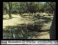 ETH-BIB-Taroudant, Alte Ölbäume und Ibise, an der Südwest-Ecke-Dia 247-09123.tif