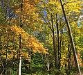 Early Autumn (6) (21952723735).jpg