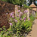 Eastcote House Walled Garden.jpg