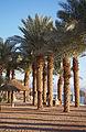 Eilat palms.jpg