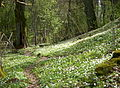 Ekholmens naturreservat 2015b.jpg