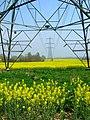 Electricity Pylons near New House Farm - geograph.org.uk - 400201.jpg