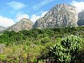 Endangered Peninsula Granite Fynbos - Newlands Forest Cape Town.jpg
