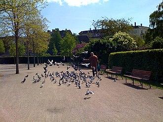 Enghaveparken - Image: Enghaveparken pigeons