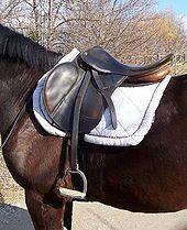 Saddle Blanket Wikipedia