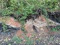 Enquin-les-Mines - Terril n° 245, Fléchinelle Est (21).JPG
