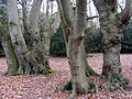 Epping Forest-trunks-401.JPG