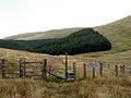 Ettrick Head - geograph.org.uk - 3201.jpg