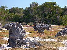 Photographie montrant des rochers en forme de champignons, vestiges d'un ancien récif corallien