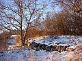 Fållan Bellmanslindarna 2012c.jpg