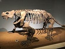 FMNH Bradysaurus.jpg