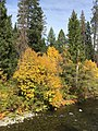 Fall Color along the River (27082941629).jpg
