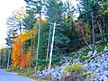 Fall Foliage on South Shore Road - panoramio.jpg