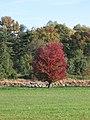 Fall colors - panoramio.jpg