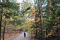 FallingWaters fall colors - panoramio (1).jpg