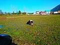 Farm - panoramio (41).jpg