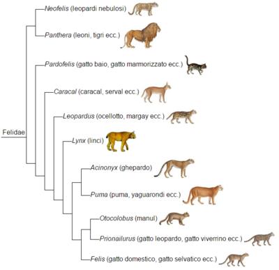 Albero filogenetico