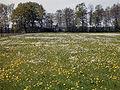 Feuchtwiese1.jpg