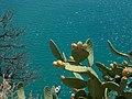 Fichi d'india Costa Jonica - panoramio.jpg