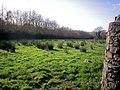 Field, Old Amroth Road, Llanteg - geograph.org.uk - 1044906.jpg