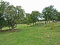 Field above Echo Hill, Sleights - geograph.org.uk - 217832.jpg