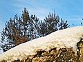 Filettole-Neve,natura e cielo.jpg