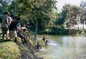 Fishing in Bangladesh - Villagers fishing in Sylhet, Bangladesh