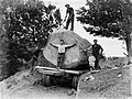 Five people around a truck transporting a piece of Kauri along a dirt road (AM 75781-1).jpg