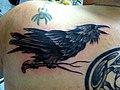 Fledgling Blackbird (11242973445).jpg