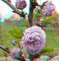 Flickr - jimf0390 - JimF 04-19-10-0010a blossoms.jpg
