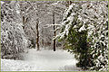 Flickr - ronsaunders47 - SNOWBOUND 12. Birchwood. Cheshire UK..jpg