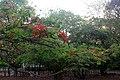 Flona Paraopeba - Flores vermelhas 01.jpg