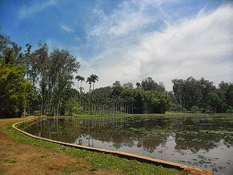 State forest (Brazil) - Edmundo Navarro de Andrade State Forest