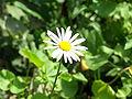 Flower 226.jpg