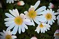 Flowers, flowers, flowers (4546101133) (2).jpg