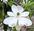 Flowers (7014746759).jpg