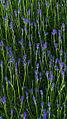Flowers (8102171675).jpg