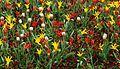 Flowers Brussels April 2012-1.jpg