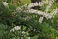 Flowers of Kerala 03880.jpg